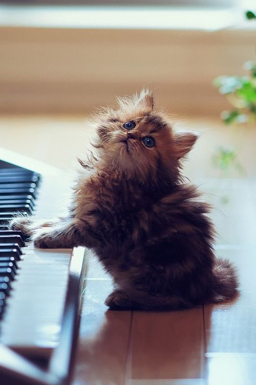 """And for my next number, I'll play """"Kitten on the Keys."""""""