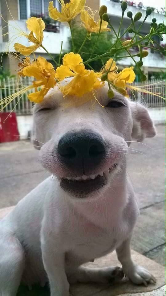 #flowers #dogs #vietnam [facebook collection]