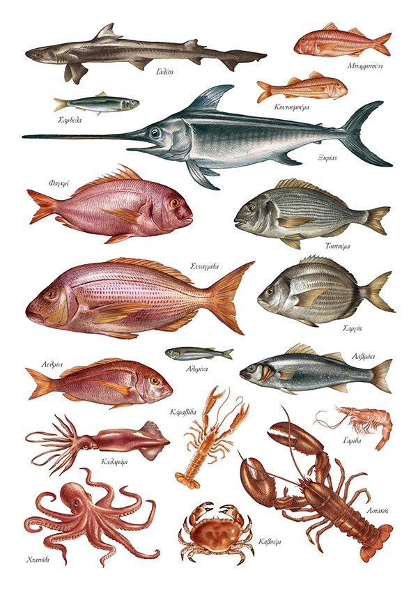 Aegean Fish Illustrations for a Plomari Ouzo promotion.