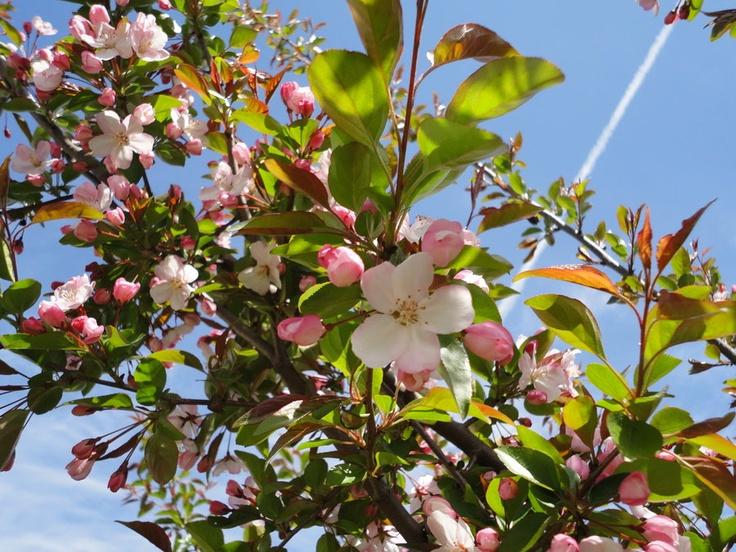 promessedefleurs fleur jardin rose pink flower
