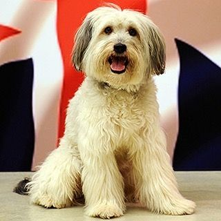 😢😢Terribly sad news as lovely little dog Pudsey has passed away. Condolences to his devastated owner Ashleigh, who won @bgt with Pudsey in 2012. 😢😢