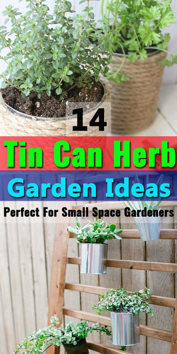 14 Tin Can Herb Garden Ideas Perfect For Small Space Gardeners Tin Can Garden Ideas Best Herbs To Grow Growing Herbs