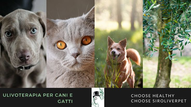 CHOOSE HEALTY - CHOOSE SIR OLIVER PET  Specialisti in Ulivo terapia per Cani e Gatti