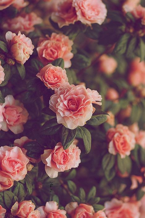 "-thatonekidchris: ""Storm of Roses """