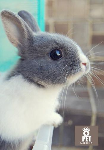 Pet Society Greece #pet #rabit #cute #bunny