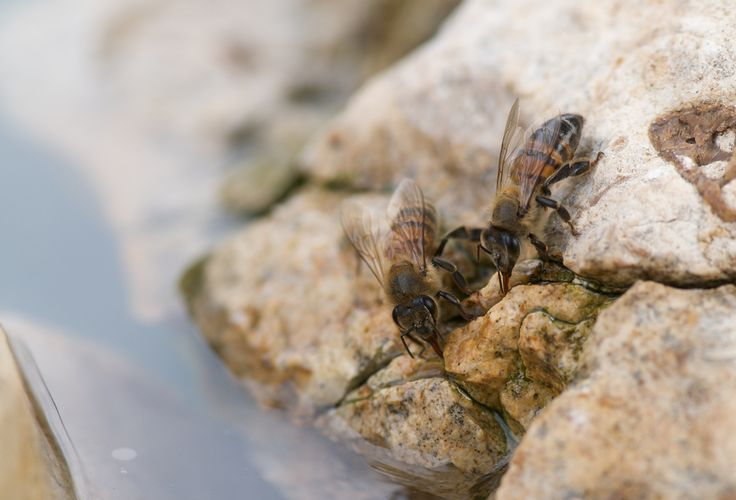 The neighborhood bees are happier now that I've added several rocks to the birdbath. | Flickr - Photo Sharing!