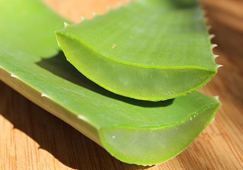 aloe-barbadensis-miller-fresh-aloe-leaf