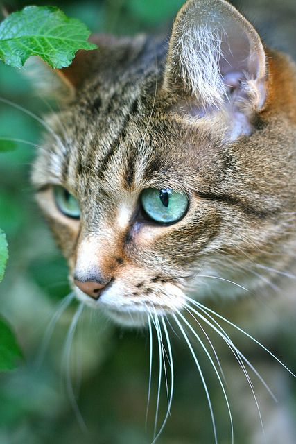 cybergata.tumblr.com  |  Purty kitteh by RellyAB on Flickr