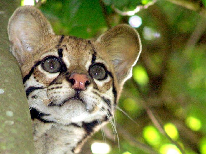 La Selva Amazónica: Una de las maravillas del planeta @alvarodabril