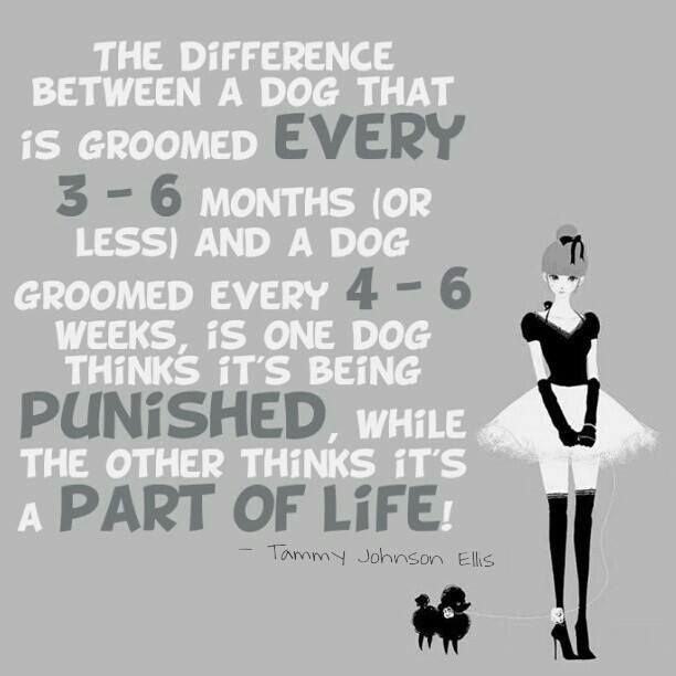 It's also been proven that dogs who are groomed every 4-6 weeks live a longer, happier life! They live a couple years longer :)