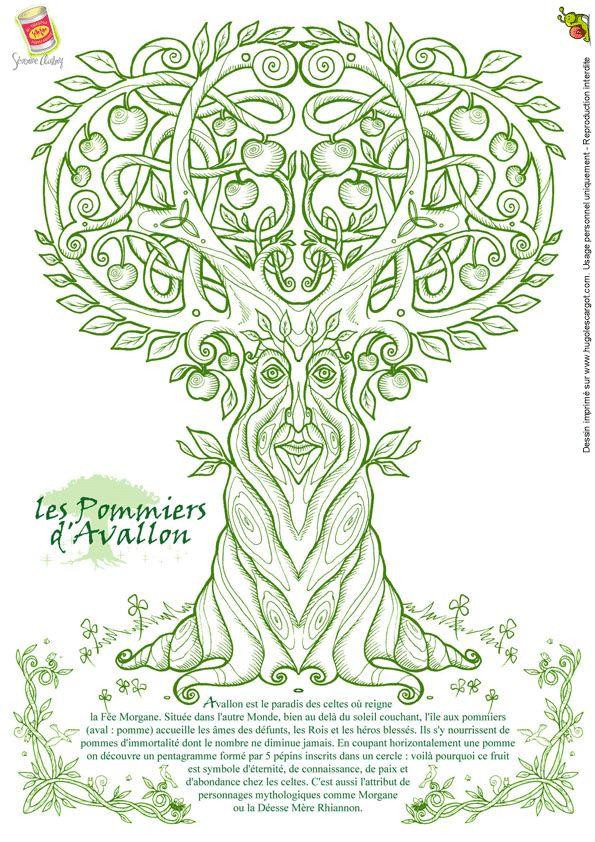 Coloriage Severine Aubry Arbre Pommiers Avallon, page 21 sur 32 sur HugoLescargot.com
