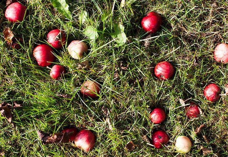 Alla kan plocka äpplen