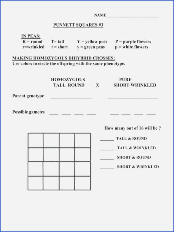 Punnett Square Dihybrid Cross Worksheet Answer Key ...
