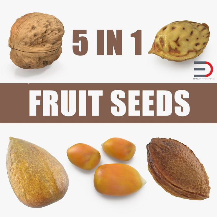 Fruit Seeds Collection 3D model