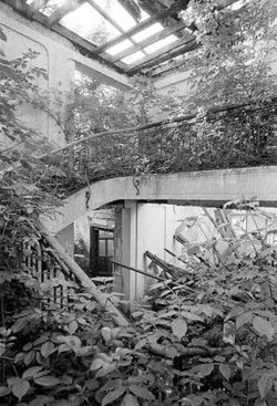 Overgrown abandoned building