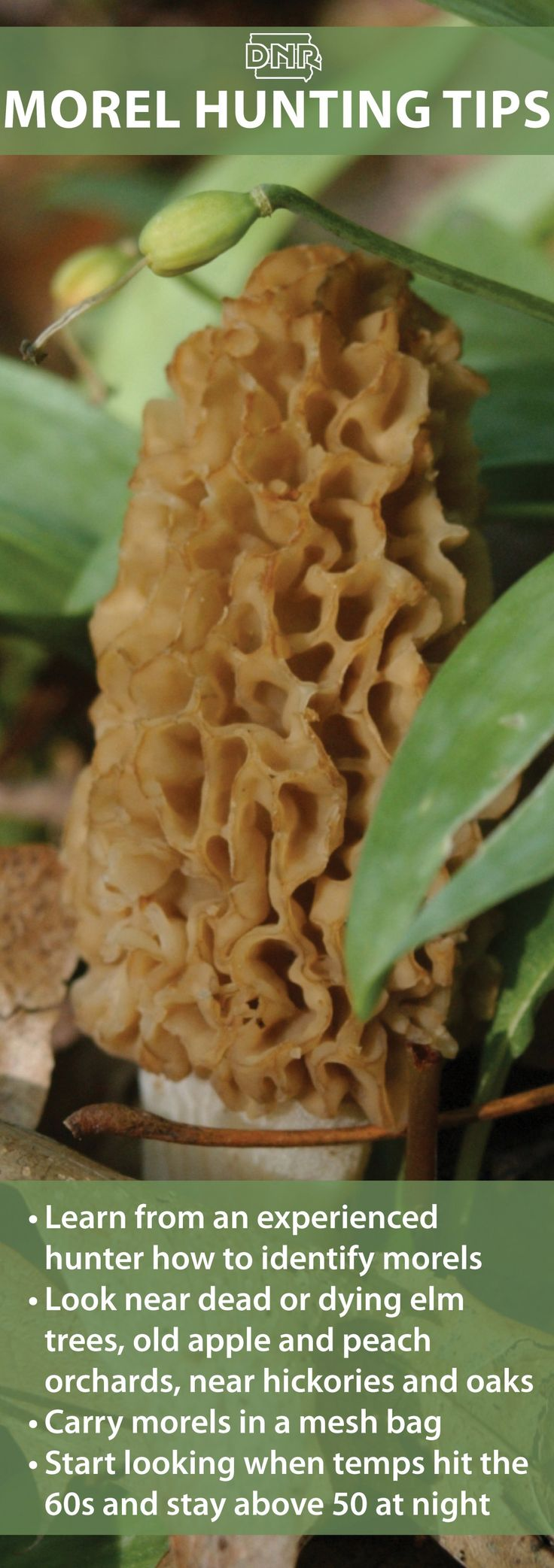 The hunt is on for morels - a spring treasure! Use our interactive map to find a park near you.