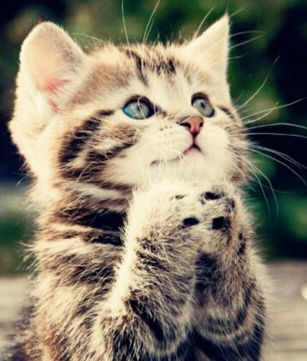I wish for a big box of cat nip