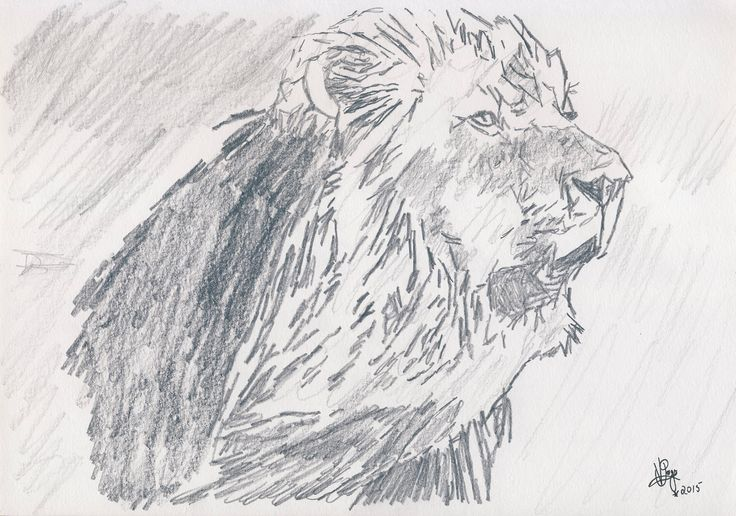 The Lone Lion - The Mighty King of the Jungle as sketched by Vincent John Page