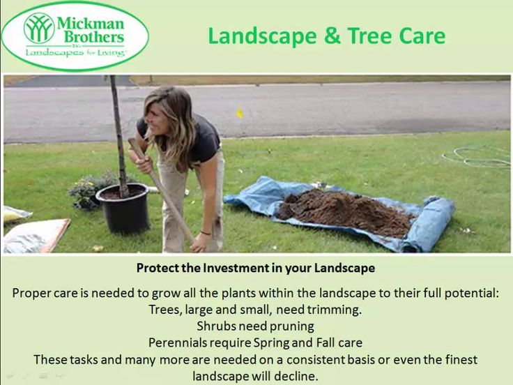Mickman Brothers also offer guidance for their esteem customers in selection of the best products and developing a beautiful landscape with healthy and flourishing trees, shrubs and plants. http://www.mickman.com