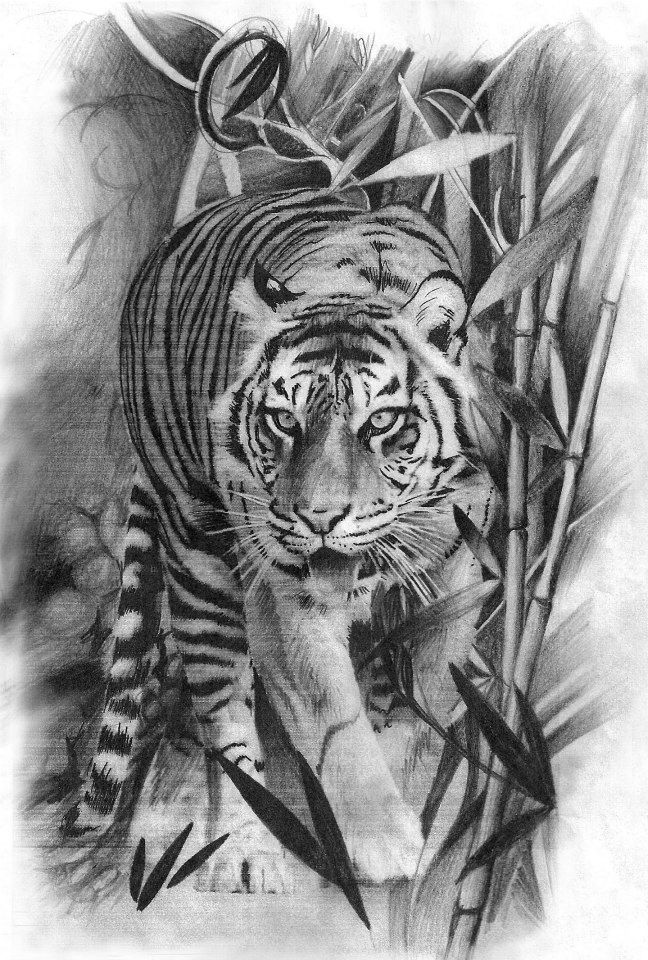 Realistic tiger pencil drawing by Marica Póti at Creation Tattooshop Budapest