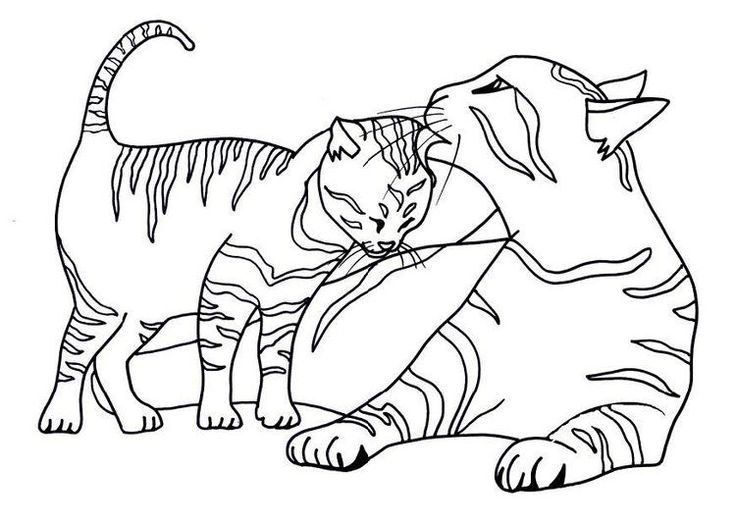 tabby cat coloring pages located in cat category free printable tabby cat coloring pages for kids - Free Printable Cat Coloring Pages