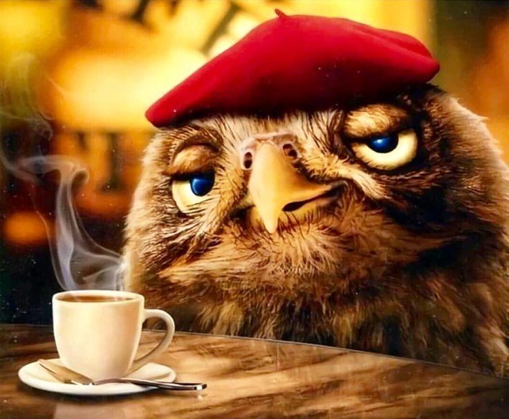 Прикольные картинки сова с кофе, открытка