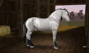 Image result for draught horses gypsy vanner