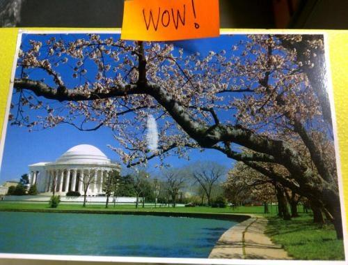 Cherry Blossom Season in Washington DC