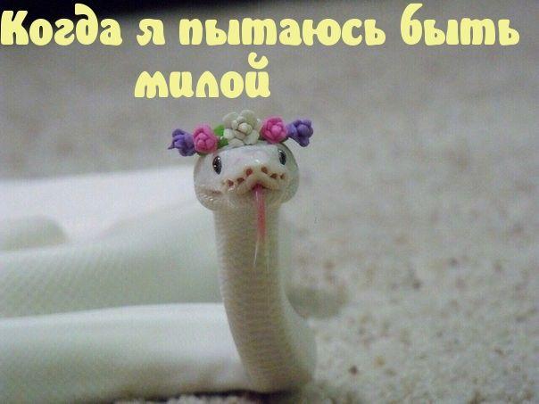 вами змея с ушами зайца картинка постоянно
