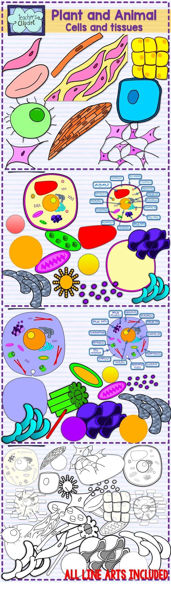 best 20 plant cell organelles ideas on pinterest animal cell