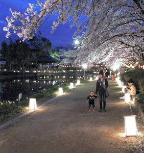 """四月五、六日の夜、東松山市の上沼公園、下沼公園を中心に、小道を照らす千数百個の灯籠とライトアップされた桜が競演するイベント「東松山夢灯路」が開かれた。Malam tanggal 5 dan 6 April, berpusat di taman Kaminuma dan Shimonuma kota Higashi Matsuyama, dibuka acara """"Jalan Lentera Mimpi Higashi Matsuyama"""" di mana seribu sekian ratus lentera yang menerangi jalan kecil saling bersaing dengan sakura yang di-lightup."""
