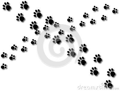Two different sets of paw prints cross path