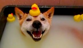 DIY Your Dog's Dandruff Shampoo To Combat Dry, Flaky Skin - BarkPost