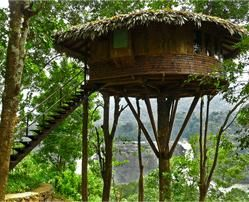 Rainforest Resort - Thrissur - Kerala