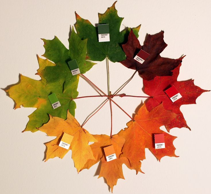 color wheel with leaves
