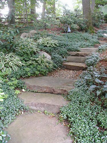 stone steps on slope | Vinca minor covers the slope and surrounds the stone steps. This works ...