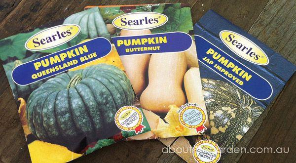Pumpkin seeds from Searles Garden Products. Plant your pumpkin seeds during Summer in your Australian garden.    #aboutthegarden
