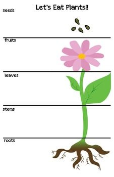 With this activity, students will sort fruits and vegetables and glue them next to the parts of a plant from which they come.