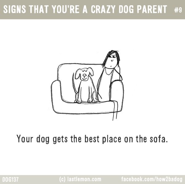 SIGNS THAT YOU'RE A CRAZY DOG PARENT #9: Your dog gets the best place on the sofa.