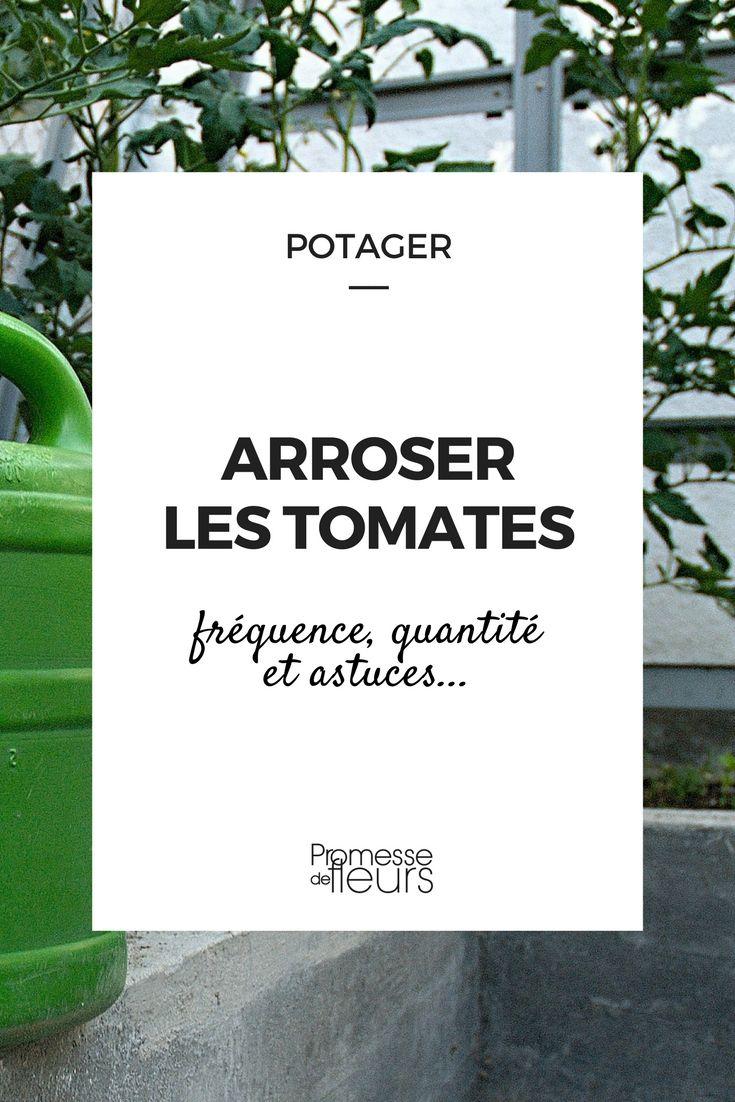 #potager #tomate #culture #arrosage
