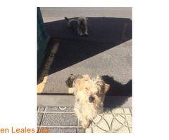 GRAN CANARIA ℹ  Encontrados en la Playa del Burrero... los conoces?? No digo zona exacta solo por privado. Siguen en la calle iba con perros y no me siguieron huye de los perros pero se acercan a las personas.  Contacto Facebook  https://www.facebook.com/elizabeth.ramirez.925   #Perdido #Encontrado  Contacto y Info: Pulsar la foto o aquí: https://leales.org/perdidos-o-encontrados/perros-encontrados_1/gran-canaria_i3215    Acerca de esta publicación:   Esta publicación NO ha sido creada por…