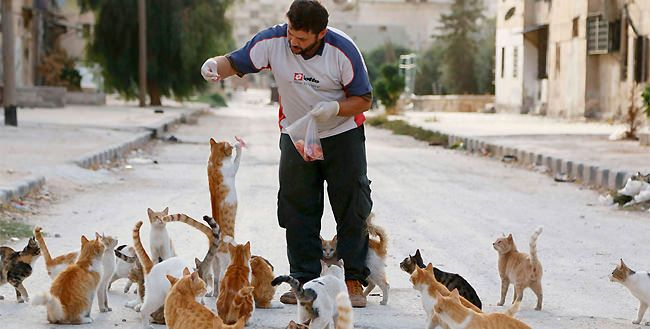 this man alaa who feeds stray cats in Syria each day is proof there can still be room for caring, compassion in face of extreme violence, every day he spends the equivalent of $4 worth of raw meat, driving to Masaken Hanano, district of Aleppo that has now become uninhabited - many of the cats were pets thus wouldn't know how to deal with things themselves - just great