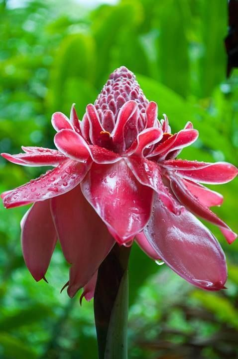 Trinidad and Tobago National Flower