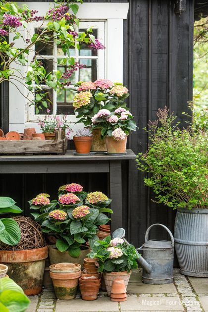 I would love to have lots of flowers on my porch or terrace just like this when I have a house! Love the simplicity and the colors of the flowers.