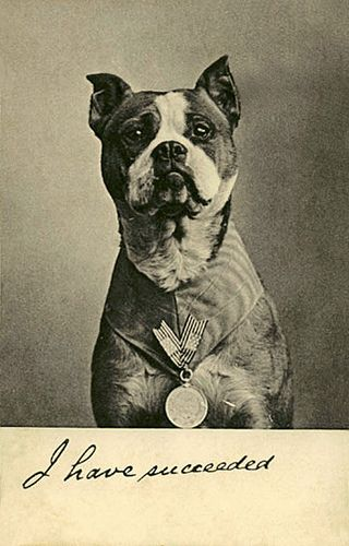 Sgt. Stubby, a WWI decorated war Boston Terrier who served with US troops.  Had a bounty on his head by the German army.