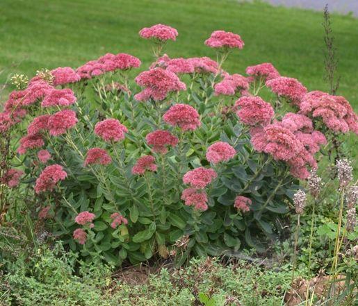 22 best What\'s In my garden images on Pinterest | What s, Garden ...
