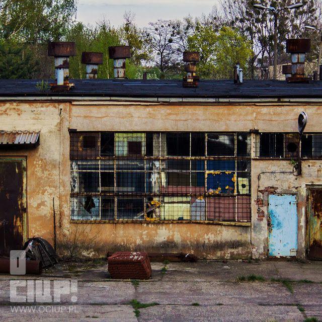 O ciup!: Jopek www.ociup.pl by Kaja Świętochowska