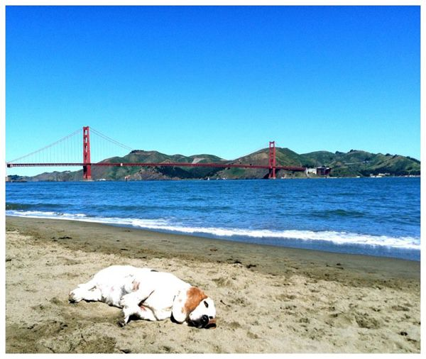 Meet George the Very Tired Basset Hound, Our Latest Facebook Obsession | Dogster