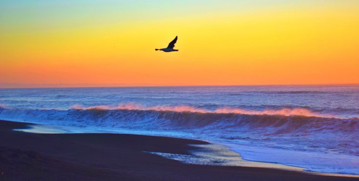 Seagull at sunrise by Wendy Allen on 500px