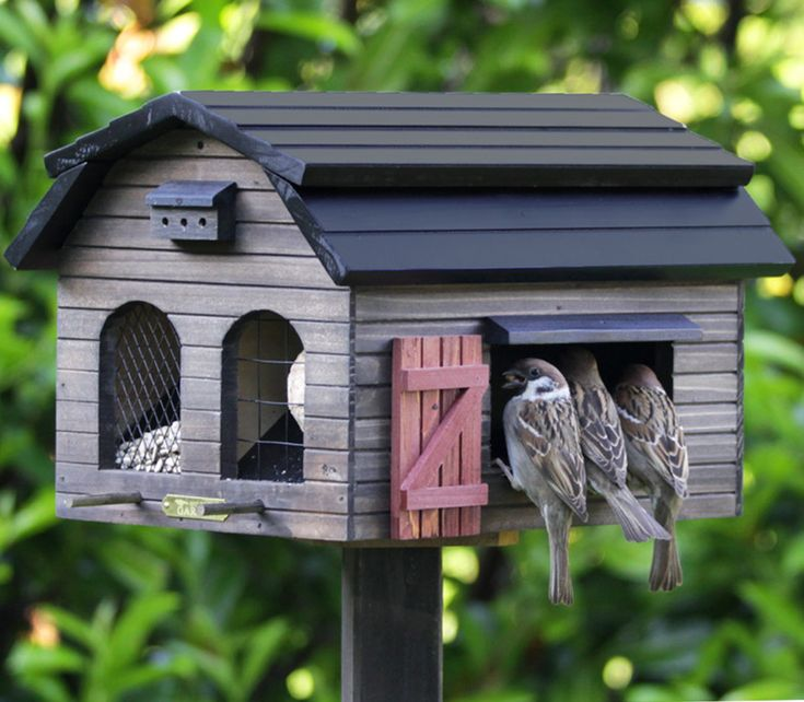 Bird feeder with sparrows! ~ where have you gone......???